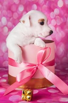 Chiot blanc mignon sur boîte rose avec archet.