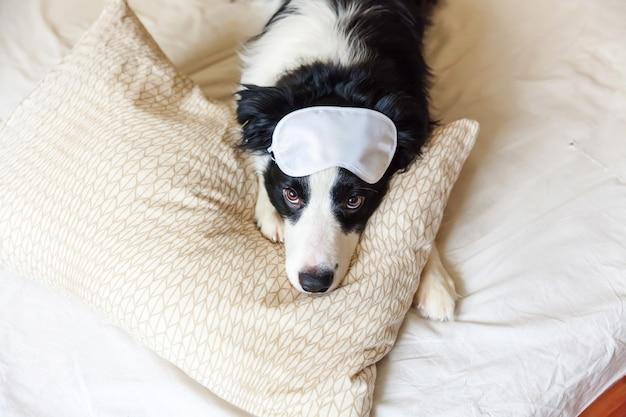 Chiot border collie drôle avec un masque pour les yeux endormi posé sur une couverture d'oreiller au lit