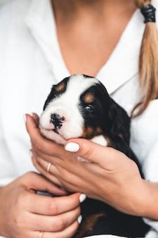 Chiot bouvier bernois dans les mains des femmes, soins pour les animaux, les nouveau-nés