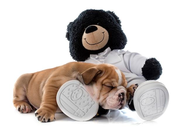 Chiot bulldog et jouet