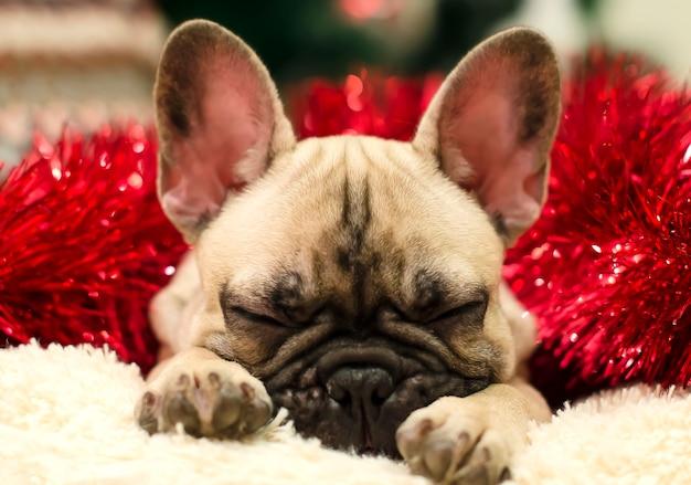 Chiot bulldog mignon dormant sur un oreiller sur un fond de clinquant rouge. nouvel an. noël