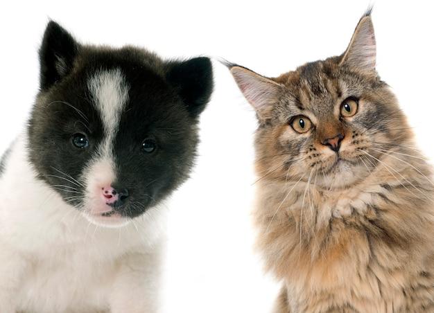 Chiot et chat