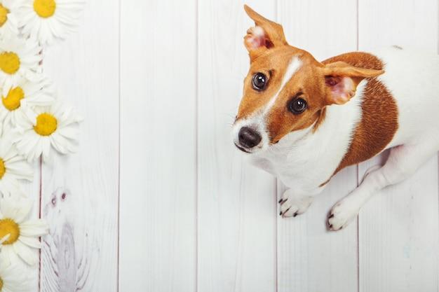 Chiot chien sur bois clair