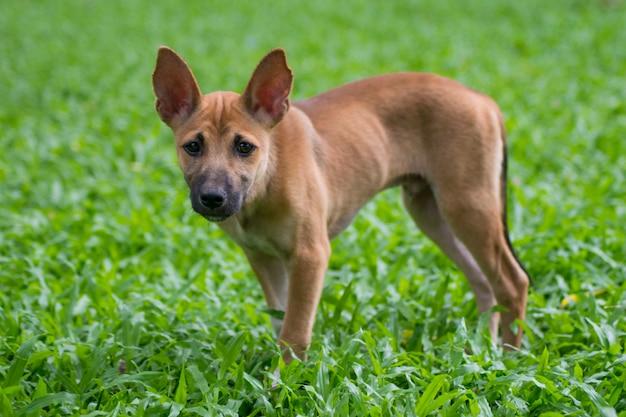 Chiot chien sur parc verdoyant