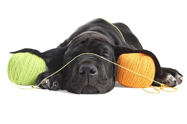 Un chiot dogue allemand noir fatigué dort sur des enchevêtrements de fils colorés.