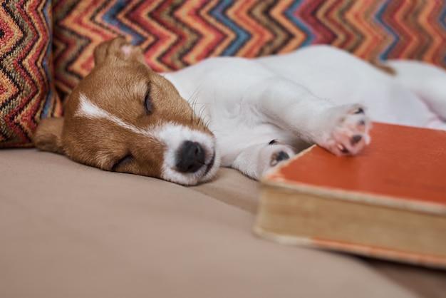 Chiot endormi sur le canapé avec un livre
