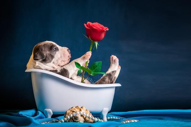 Le chiot est allongé dans la salle de bain avec une rose dans la patte. félicitations pour la journée internationale de la femme.
