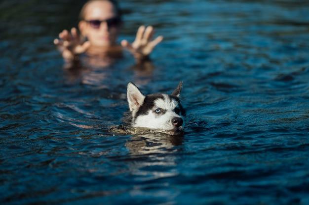Chiot husky avec des yeux de couleurs différentes en raison de l'hétérochromie flotte dans l'eau.