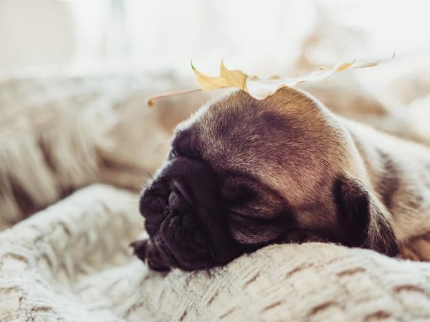 Chiot mignon et doux allongé sur le rebord de la fenêtre près de la fenêtre par une journée ensoleillée. concept de soins pour animaux de compagnie