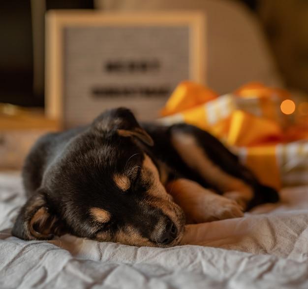 Chiot mignon portant dans le lit avec des lumières et des coffrets cadeaux
