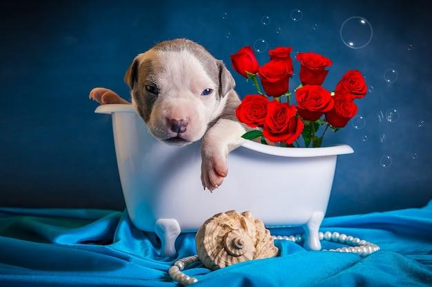Le chiot se trouve dans la salle de bain avec un bouquet de roses. félicitations pour la journée internationale de la femme.