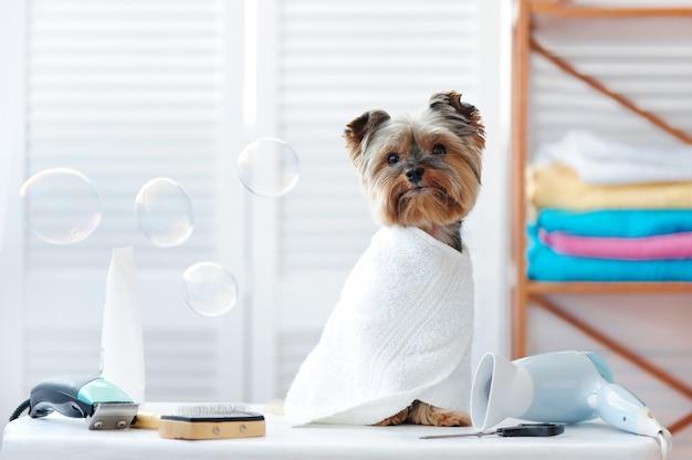 Chiot yorkshire terrier dans un salon de toilettage