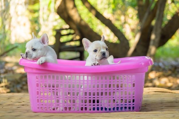 Chiots de bouledogue français dans le panier rose