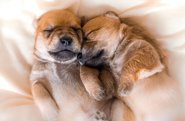 Chiots nouveau-nés câlins dans de beaux rêves dormant ensemble