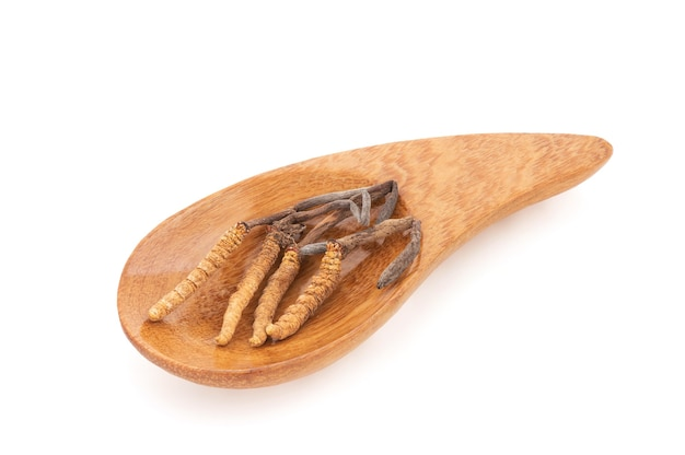 Chong cao ou cordyceps sinensis isolé sur fond blanc avec un tracé de détourage.