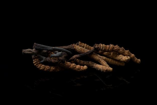 Chong cao ou cordyceps sinensis isolé sur fond noir