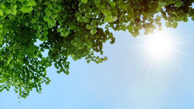 Chongkho ou arbre d'orchidée pourpre dans le fond de feuilles vertes de jardin