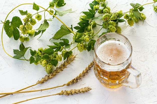 Chope de bière en verre avec des épis d'orge et de branches de houblon sur fond blanc structuré. vue de dessus.