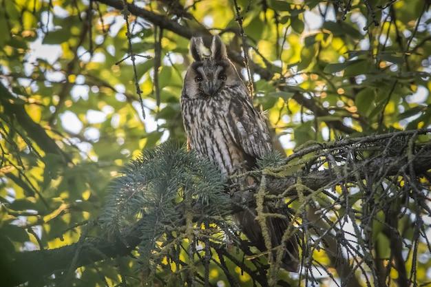 Chouette assise sur une branche et regardant la caméra