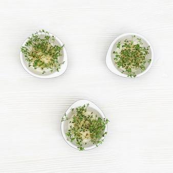 Les choux de micro-légumes frais de roquette contiennent des nutriments et des vitamines