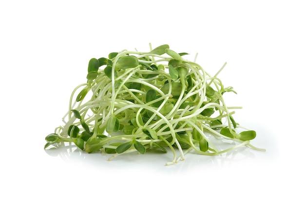 Choux de tournesol jeunes verts isolés sur fond blanc