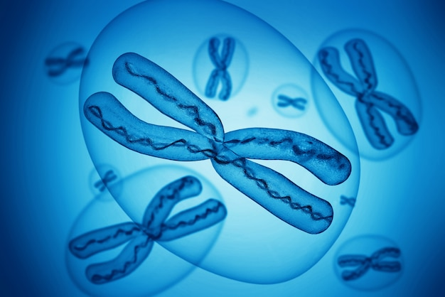 Chromosomes x