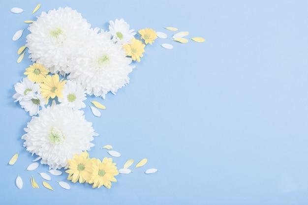 Chrysanthème blanc et jaune sur la surface du papier bleu