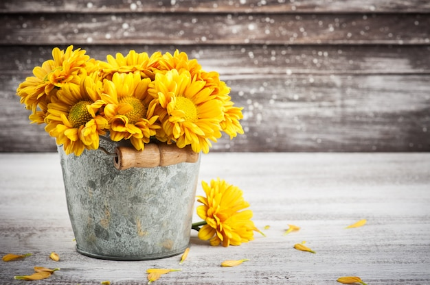 Chrysanthème jaune doré