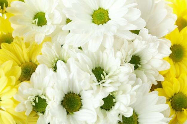 Chrysanthèmes blancs et jaunes partout en arrière-plan, gros plan.