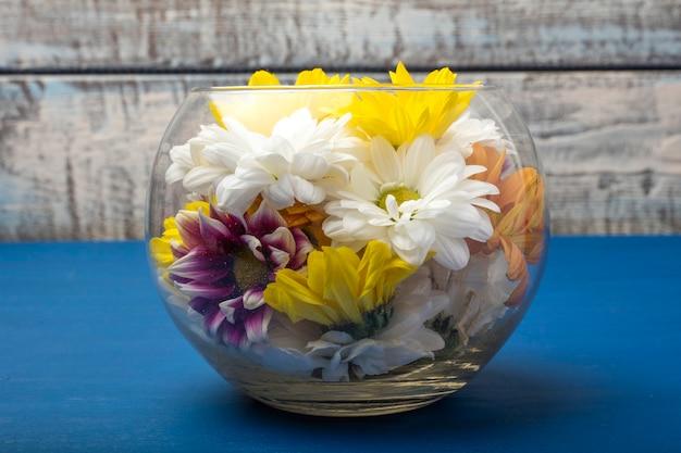 Chrysanthèmes colorés dans un vase en verre sur fond bleu. copier l'espace