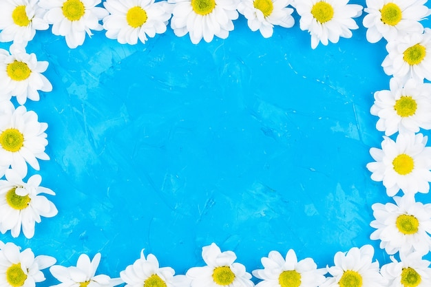 Chrysanthèmes sur fond bleu