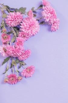 Chrysanthèmes sur fond de papier violet