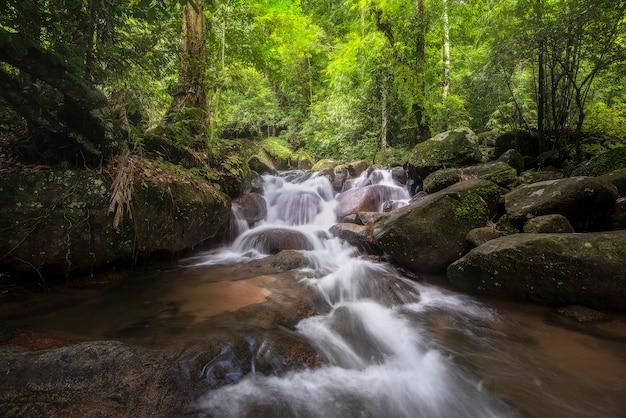 Chute d'eau dans la forêt profonde