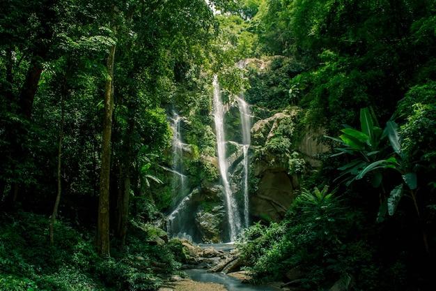 Chute d'eau dans la forêt