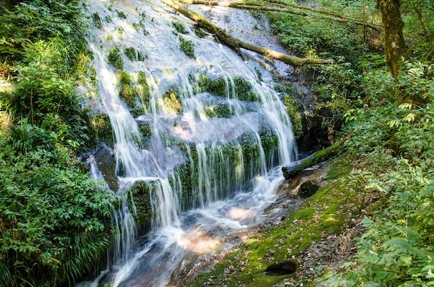 Chute d'eau dans la jungle verte