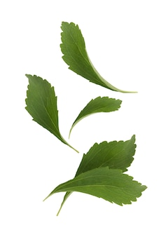 Chute de feuille de stevia isolée sur fond blanc avec un tracé de détourage. vue de dessus, mise à plat.