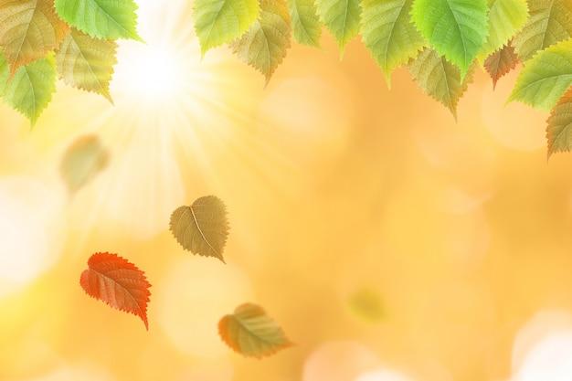 Chute des feuilles d'automne avec fond naturel de soleil