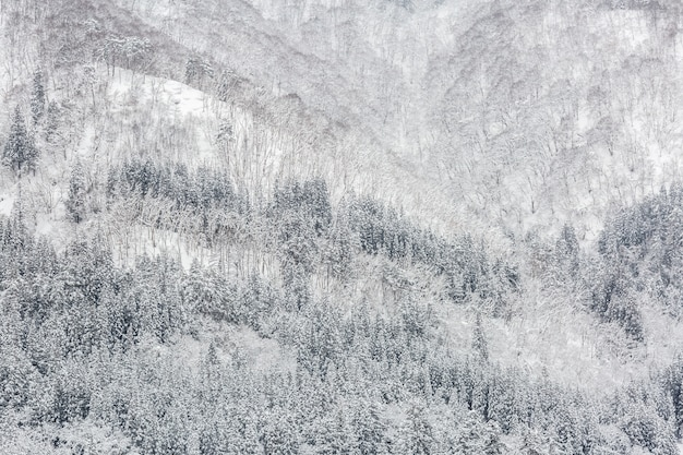 Chute de neige avec forêt