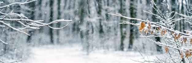 Chutes de neige dans la forêt. fond de noël et du nouvel an d'hiver avec des branches d'arbres enneigées dans la forêt lors d'une chute de neige. paysage d'hiver avec l'image de la forêt