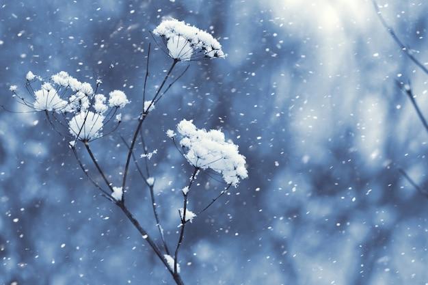 Chutes de neige dans la forêt, tiges de plantes sèches recouvertes de neige