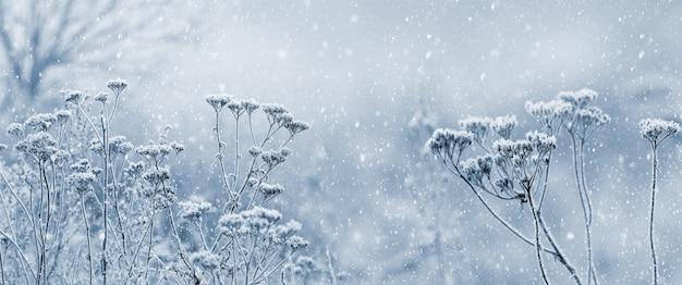 Chutes de neige dans le jardin d'hiver avec des fourrés d'herbe sèche et un arbre dans le brouillard. fond de noël et du nouvel an