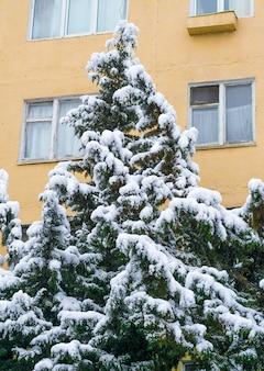 Chutes de neige dans la ville, arbres sous la neige