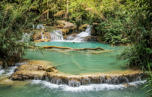 Chutes de tat kuang si. belles cascades à luang prabang, laos.