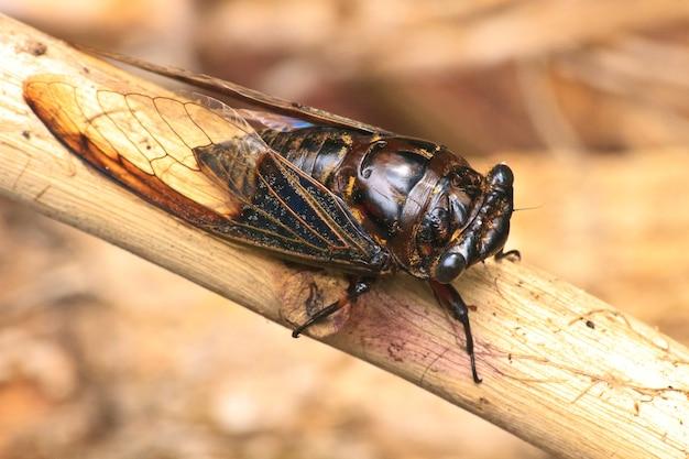 Cicadas dans les arbres