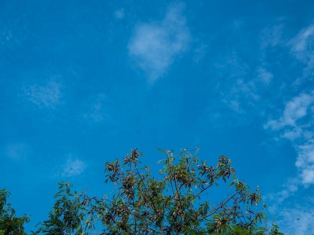 Ciel bleu et branches d'arbres