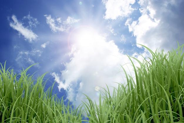 Ciel bleu ensoleillé et herbe