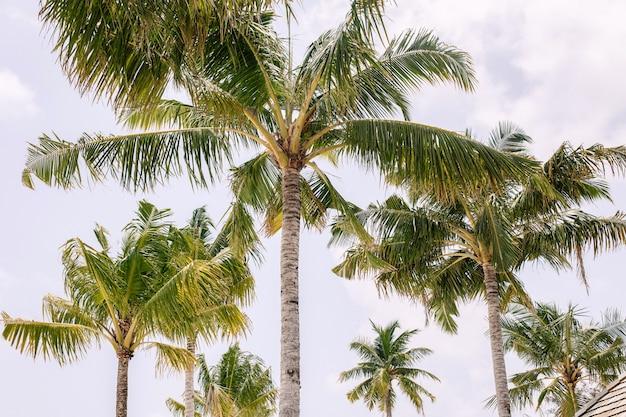 Ciel bleu et palmiers vue d'en bas