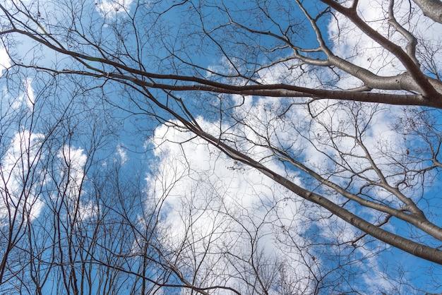 Ciel bleu avec plein de couverture de l'arbre et des nuages, concept nature et ciel