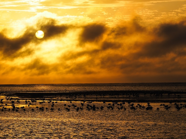 Ciel coucher de soleil orange avec silhouette de flamants roses sur la côte de l'océan atlantique, walvis bay, namibie