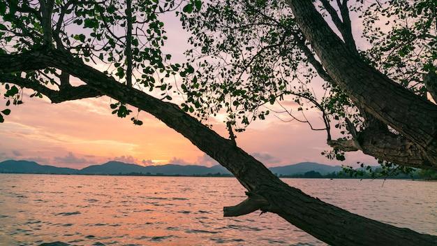 Ciel dramatique au coucher du soleil sur la montagne paysage paysage nature vue avec arbres au premier plan